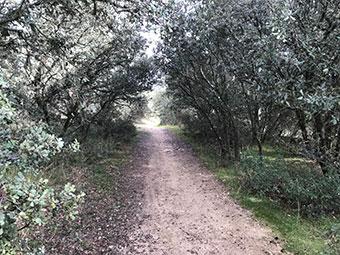 Foto del camino de Valdenuño
